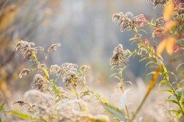 Sesja plenerowa Komorów Michałowice Pole natura przyroda babie lato pies sesja z psem sesja ślubna fot.White Balance015